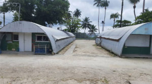 Two weathered Nissen huts, pictued in the Delta camp of the former Manus RPC at Lombrum. Palm trees and fences can be seen in the background.