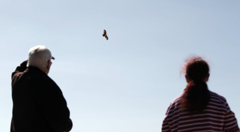 A man stands to the left of the frame and a woman stands to the right of their frame. Both have their backs toward the camera and are looking to the sky at a flying eagle.
