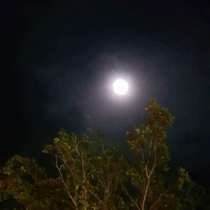 The moon shines brightly in a dark sky. A tree protrudes from the bottom of the frame.
