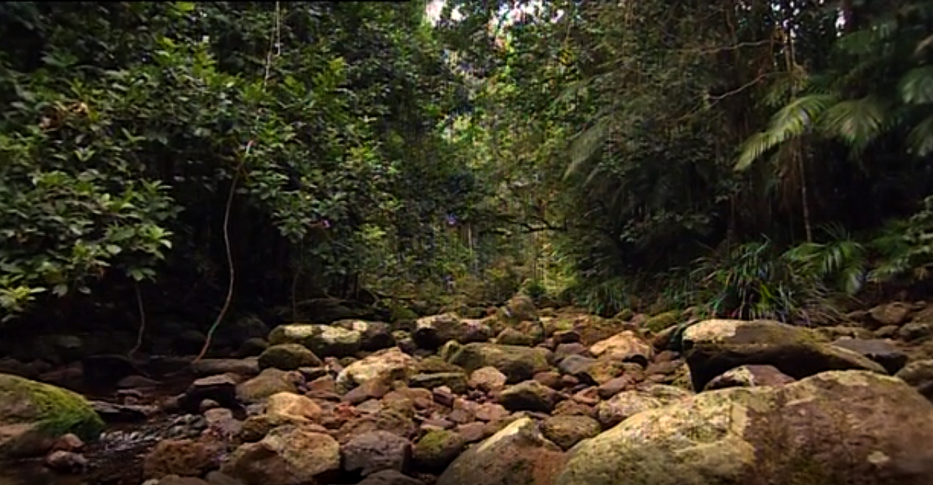 A photo taken in a forest of what appears to be rocks in the foreground that might be a dry riverbed, with trees and bushes in the background.