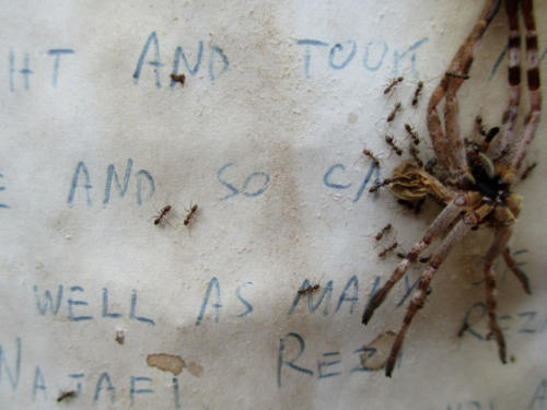 Detail photo, 'Final Statement', with spider, 2017.