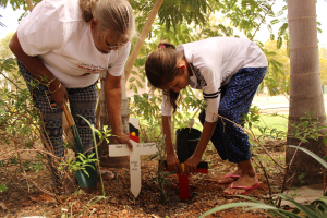 Ms Dhu's Nana and sister plant a desert rose outside the South Hedland Police station for Ms Dhu, South Hedland, 30 April 2015